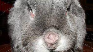 лікування кроликів