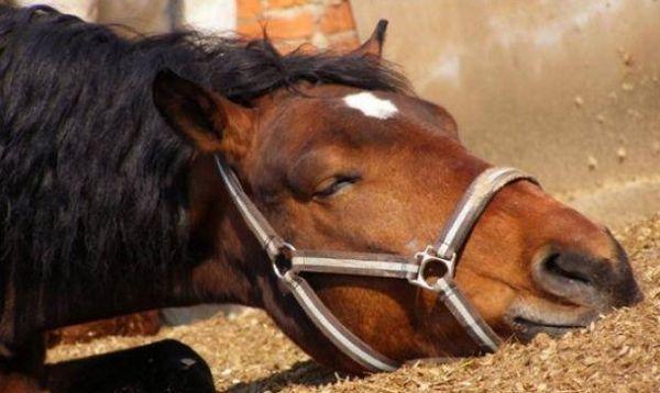 Болен кон