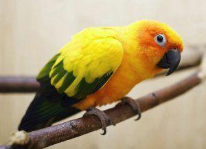 Папагалски заболявания и тяхното лечение