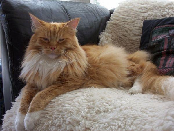 Choroby starších mačiek a mačiek