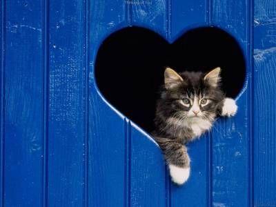 Ochorenie srdca u mačiek