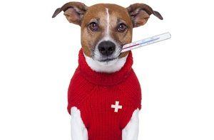 Підвищення температури у собак