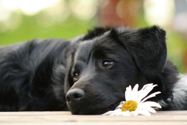 Choroby žalúdka u psov: popis hlavných patológií