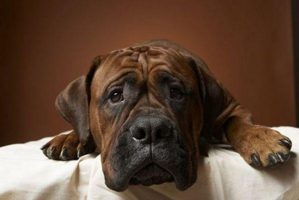 Choroby gastrointestinálneho traktu u psov - zoznam chorôb, s ktorými nemôžete žartovať