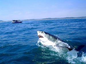 Habitát veľkých bielych žralokov