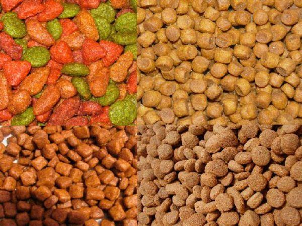 Сухий корм для кішки савана