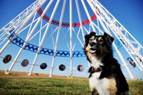 Собаки бордер коллі дуже веселі, грайливі, з раннього віку для них важлива соціалізація, тому з ними потрібно проводити багато часу