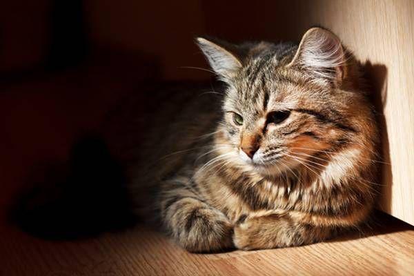 Bordetelóza u mačiek - príznaky a prevencia pred zákernou chorobou