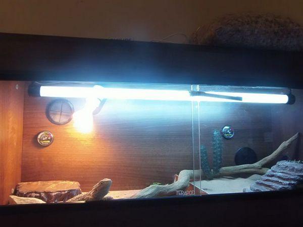 Тераріум з ламповим освітленням