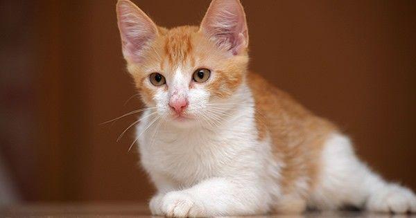 Borelióza u mačiek - metódy infekcie a následky lymskej boreliózy