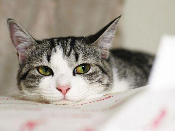 Botulizmus je potravinová infekcia u mačiek
