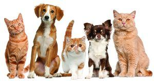 Лікування собак і кішок