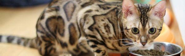 Brit care: popis a odrody krmiva pre mačky