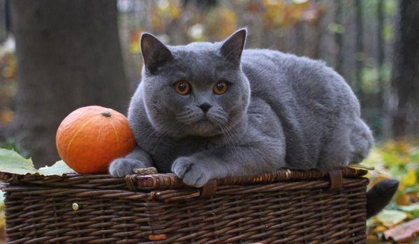 Великий вид кішок