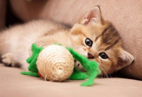 Іграшки для кішки
