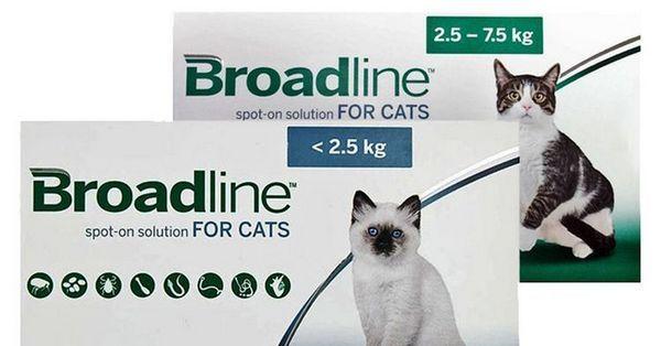Бродлайн Спот Он для кішок