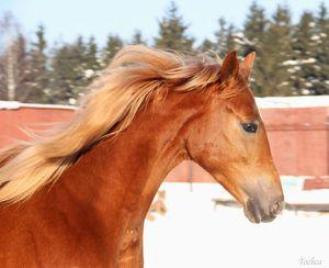 Будьонівська коня і її зміст