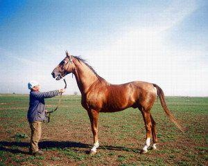 Кінь на пасовище