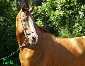 Зміст будьоннівських коней
