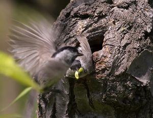 пташеня годується