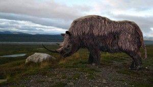 Hnedý a biely vlnený nosorožec: popis a životný štýl