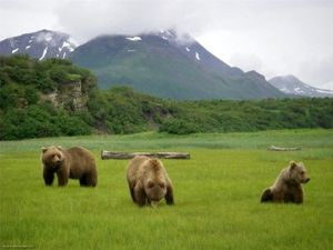 Житла бурих ведмедів