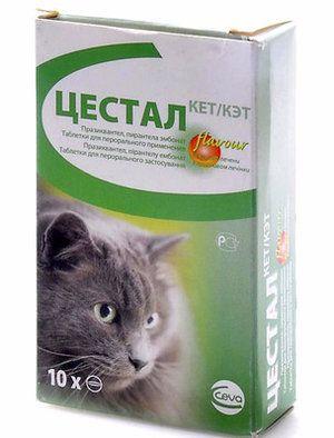 «Цестал Кет» - від чого допомагає і як давати кішці