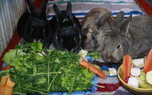 Чим годувати кроликів: корми і умови годування