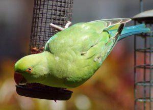 Как можете да храните папагали и какво не можете