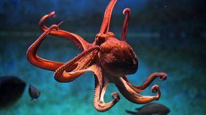 Chápadlá chobotnice