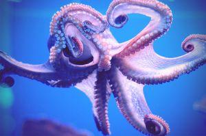 Biotop chobotnice