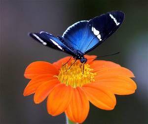 Čo motýle jedia v prírode