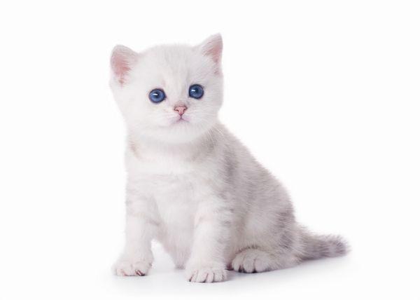 Kedy začnú mačiatka chodiť?