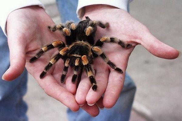 Čo robiť, ak si na vašu ruku sadol pavúk: obraciame sa na značky