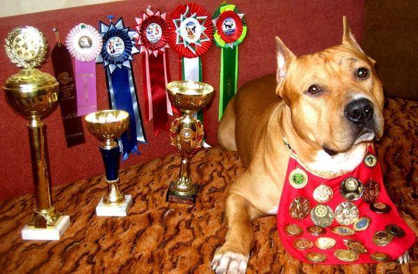 Какво представляват RKF документите за куче и колко лесно е да се направи родословие