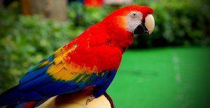 Какво е сепия и защо се нуждаят от папагали
