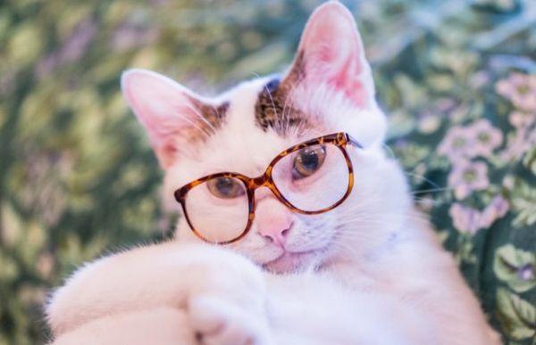 Кішка в окулярах