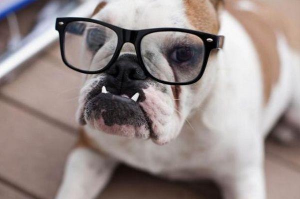 Собака в окулярах