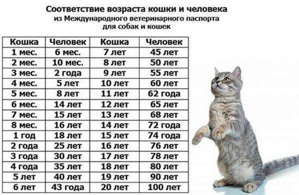 Скільки живуть кішки