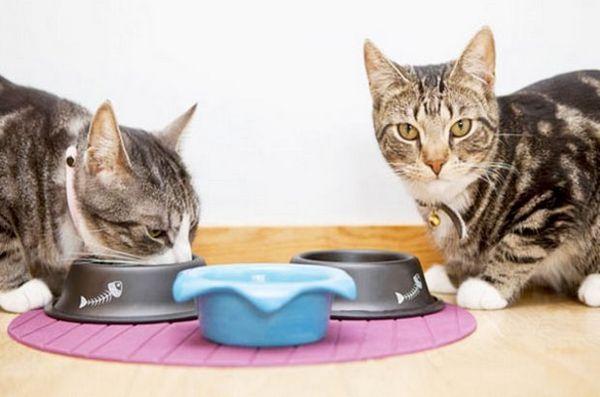 харчування кішки