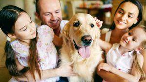 дегельмінтизація собак