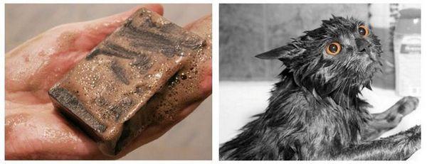 Як помити кішку Дегтярний милом