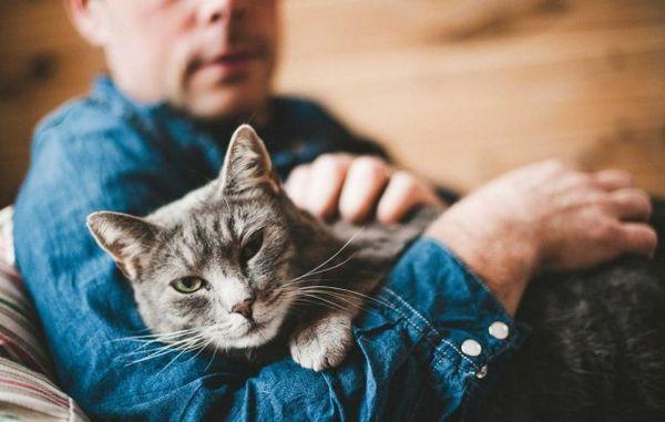 Дехінел для кішок