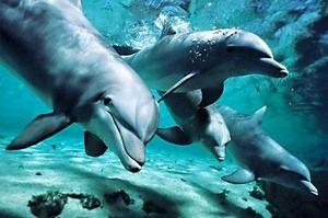 Je delfín zviera alebo ryba?