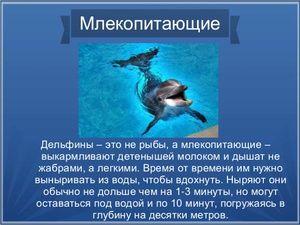 Delfíny sú cicavce.