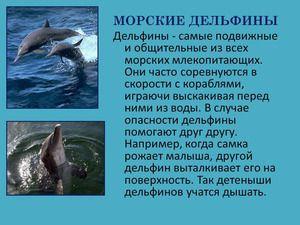 Morské delfíny sú zvieratá, aj keď žijú vo vode.