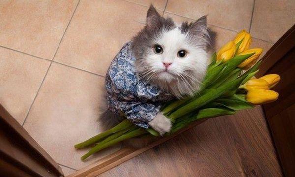 Кот з тюльпанами