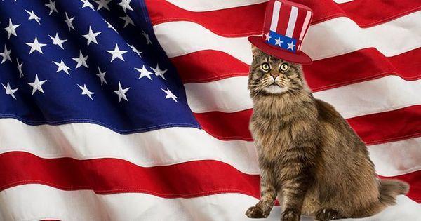 Кіт на тлі американського прапора