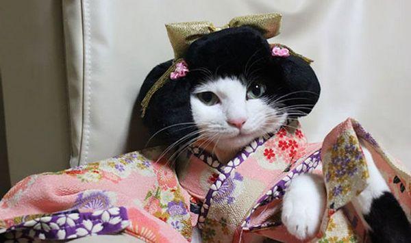 Кішка в кімоно і перуці