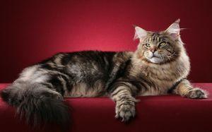 Найрозумніші котячі породи